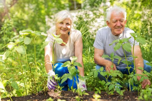 A Sense of Purpose: The Secret to Longevity